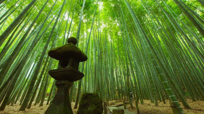 Bamboo Garden, Kamakura, Japonia