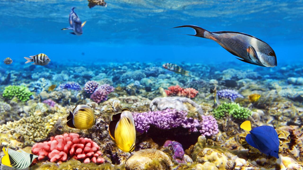 Sharm el Sheikh recifuri de corali