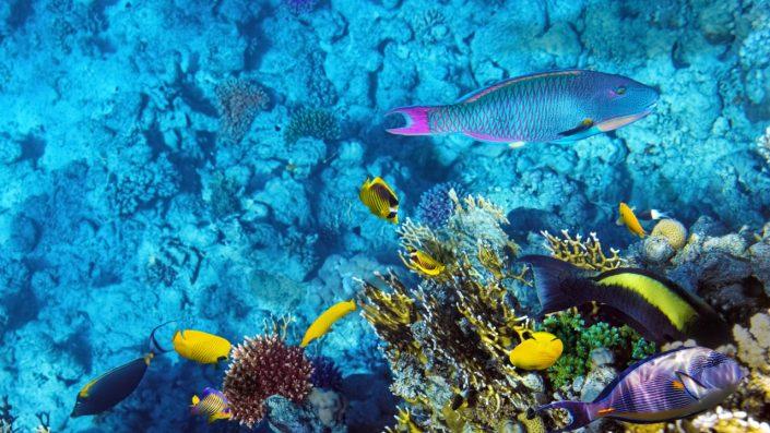 recifuri de corali in Sharm el Sheikh sejur