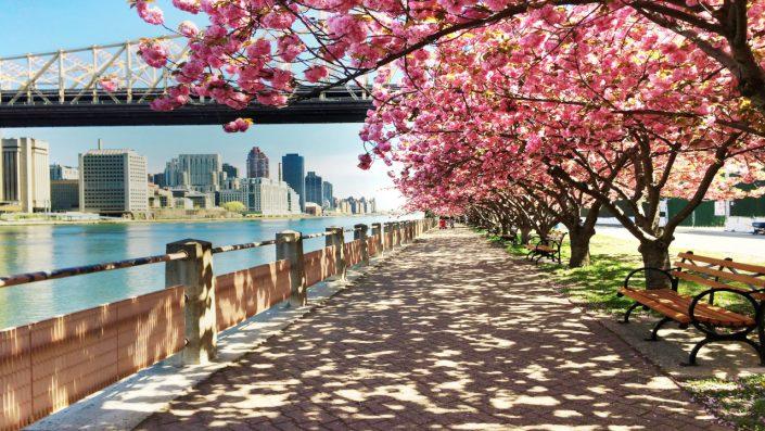 Oraș primăvara