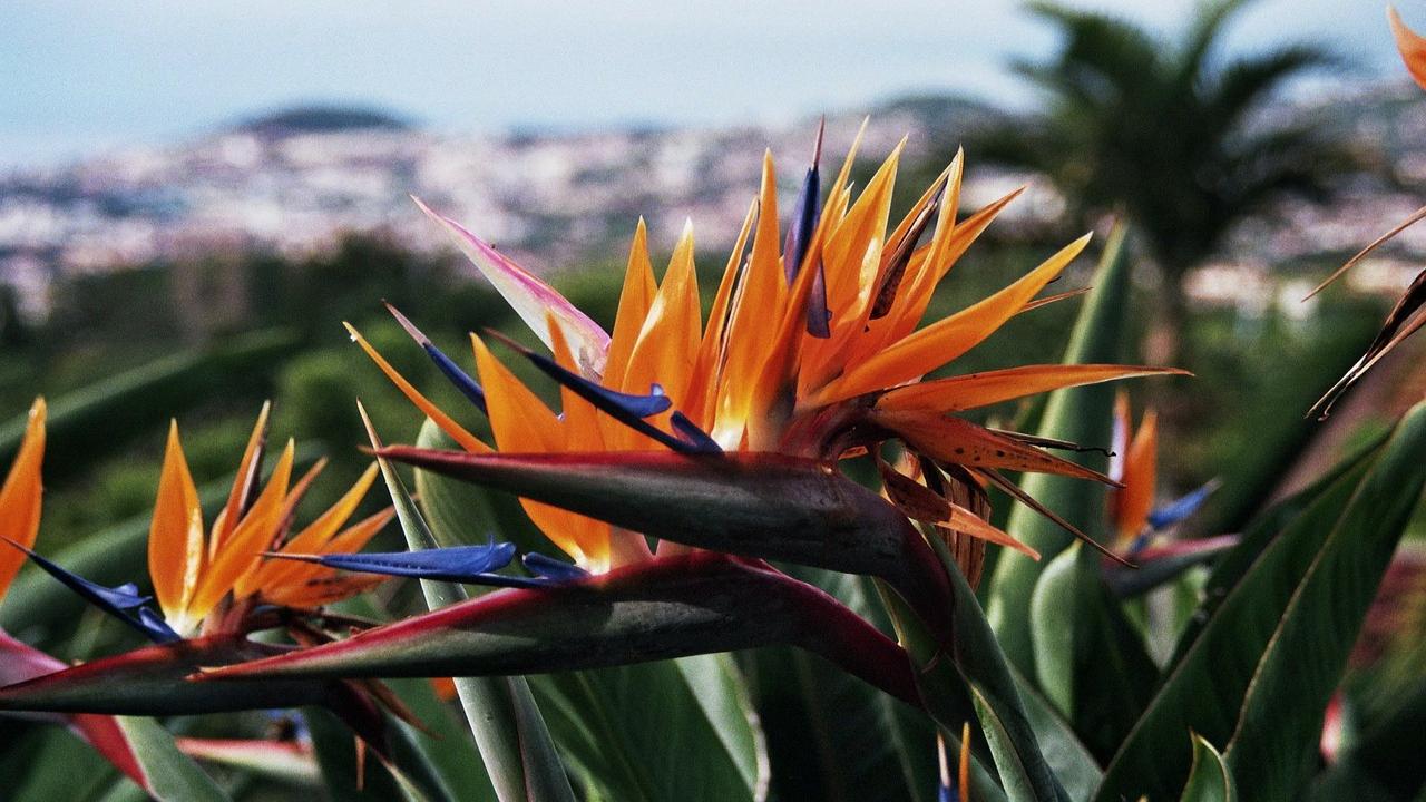 Grădina botanică Madeira Festivalul Florilor
