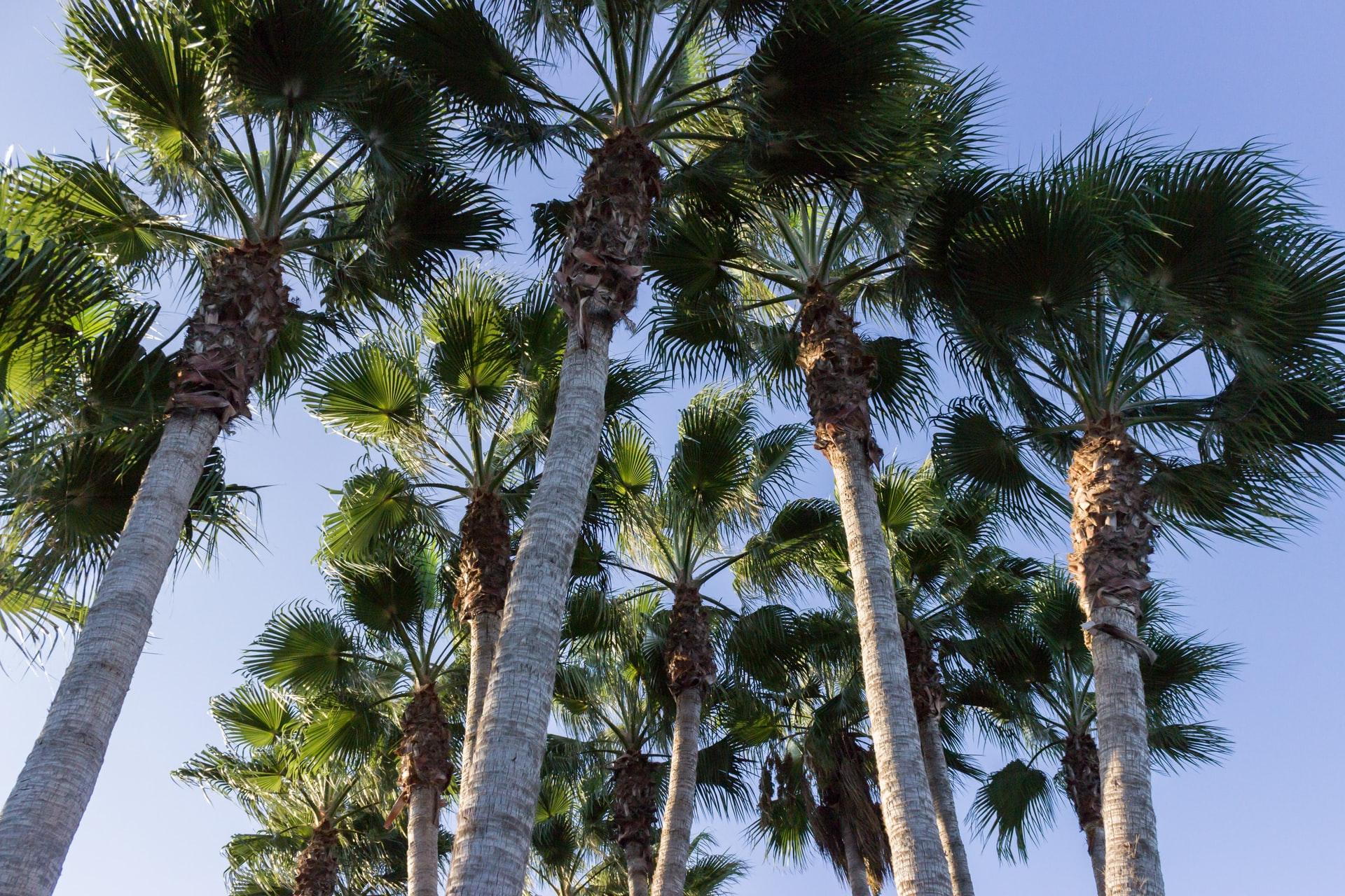 Palmieri in Cipru