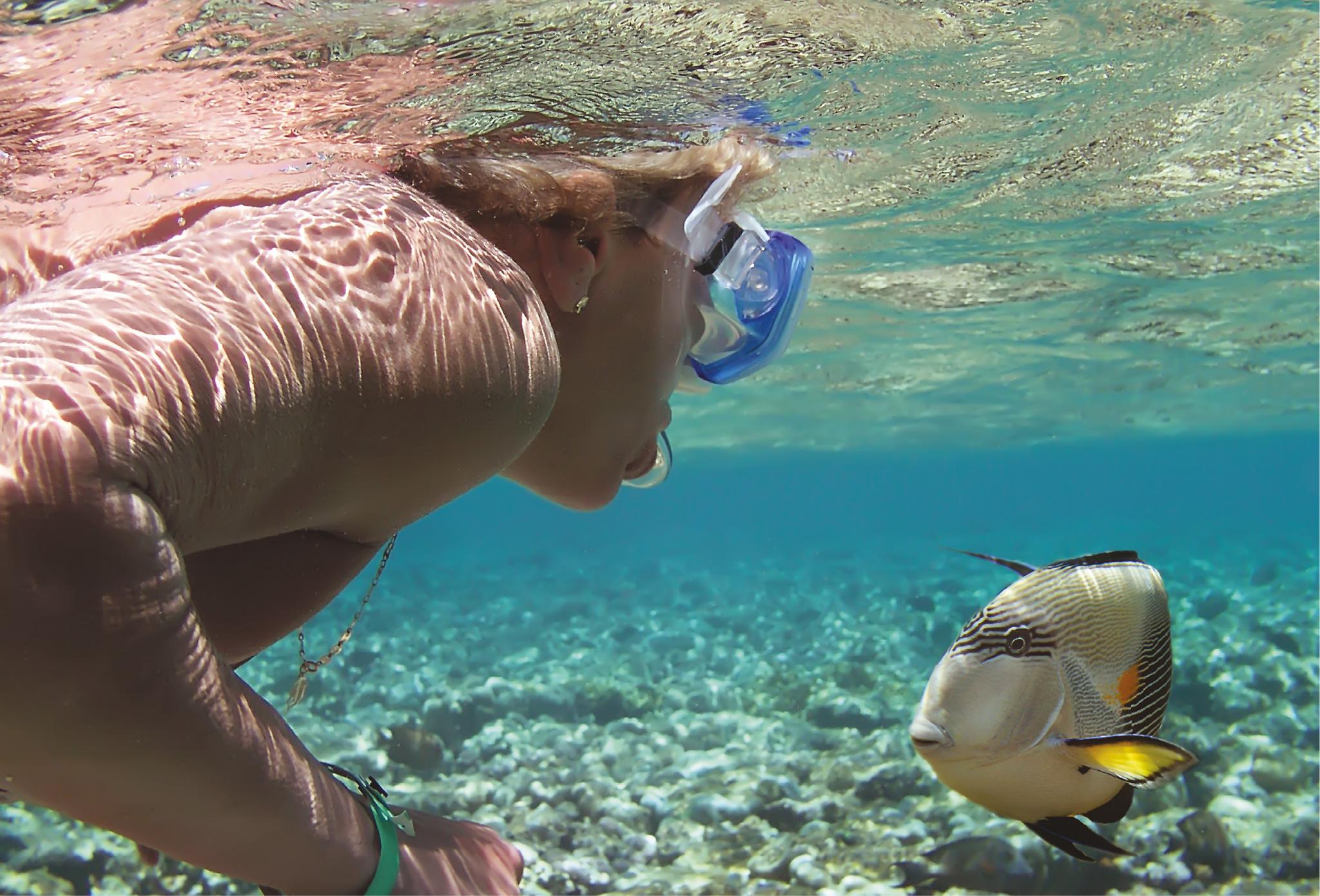 Snorkeling in Egipt